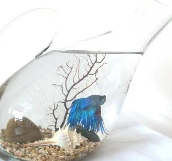 Betta in Decanter $45.90