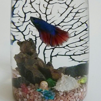 Betta in Glass bottle $35.90