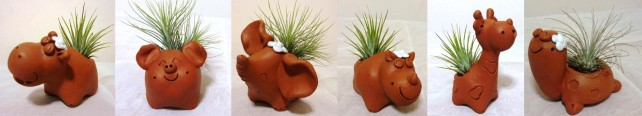 Cute airplants