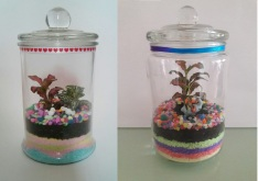 Colour Sand Terrarium