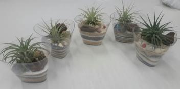 My Air Plant Terrarium