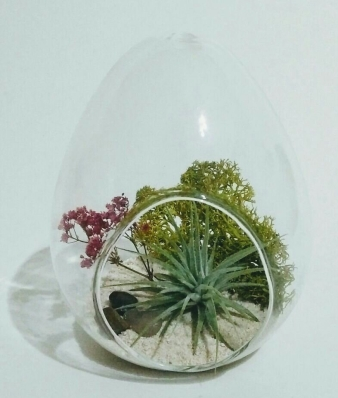 Air Plant in Glass Egg
