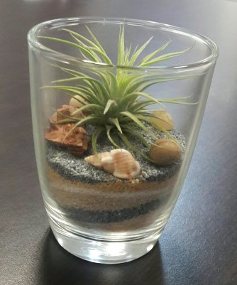 Air Plant on sand layers